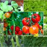 Lịch trồng rau sạch quanh năm