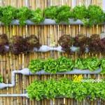Hướng dẫn trồng rau tại nhà không cần đất