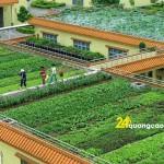 Những mô hình trồng rau sạch tại nhà